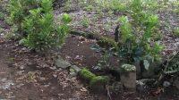 Cagar Budaya Makam Tuangku Badaruddin di Kota Pariaman