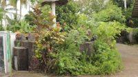 Cagar Budaya Pillbox Jepang Kurai Taji di Kota Pariaman