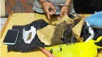 narkoba-mahasiswa-mentawai-sumbar-halonusa.com-kariadil harefa-kalimanatan timur-1234556