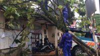 Belasan Pohon Tumbang dan Puting Beliung Rusak Rumah Warga di Padang