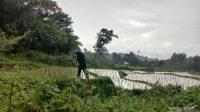 Tim KSDA Resor Agam, Sumatera Barat bersama warga melakukan identifikasi keberadaan Harimau Sumatra (Panthera Tigris Sumatrae) di area penggunaan lain (APL).